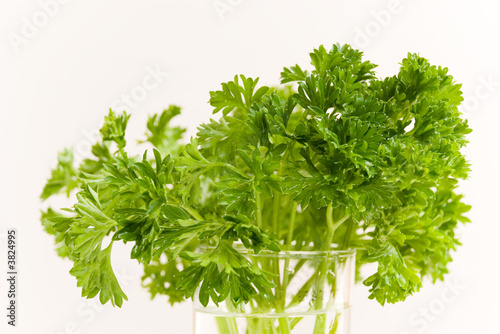 parsley on the glass