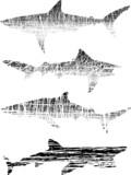 Grunge sharks poster