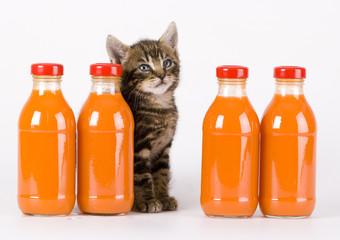 kitten & juice