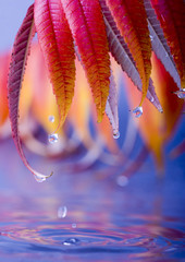 wet colorful leaves