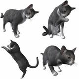 Katze-British Short Hair poster