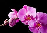Fototapeta kwiat - kwiaty - Kwiat