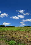 ploughed  pasture against beautiful sky with cumulus clouds poster