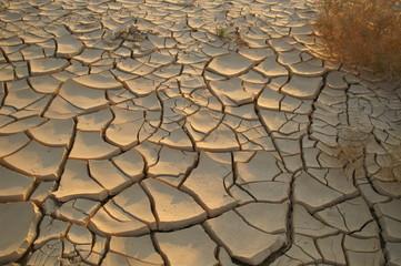 Dry soil - ecology problem