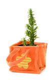 little cactus in felt-flowerpot poster