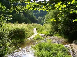 stream in valley