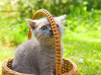 Small funny kitten sitting in a basket