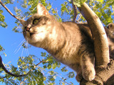 tabby kitten climbing up in a tree