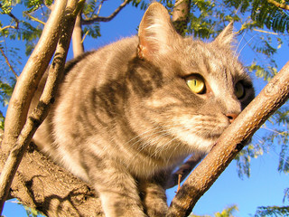 tabby kitten in a tree