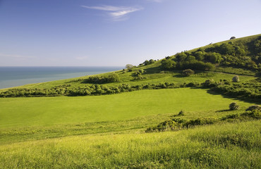 Green field with sea.