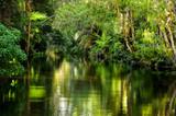 A magnificent rainforest creek poster