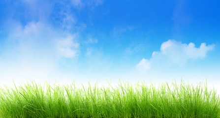 Herbes sur fond de ciel bleu