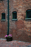 Rustic bricks wall and a flower basket poster