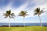 Hawaiian Palm Trees on Volcanic Lava Coast of Kona Island poster