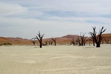 Arbres morts - Namibie - Deadvlei