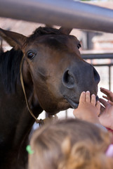 Children caress a horse, stretch to it hands
