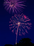 Two fireworks bursts with silhouette of trees visible poster
