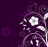 Beautiful flower background, vector illustration