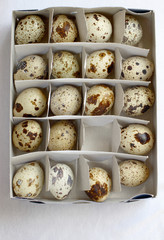 19_eggs_in_box
