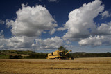 Combine harvester working in the fields  poster