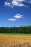 rye field against cumulus clouds, focus is set in foreground poster