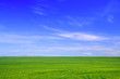 Nature background. Green grass field against a blue sky