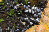 Cluster of young mussels and other shells  poster