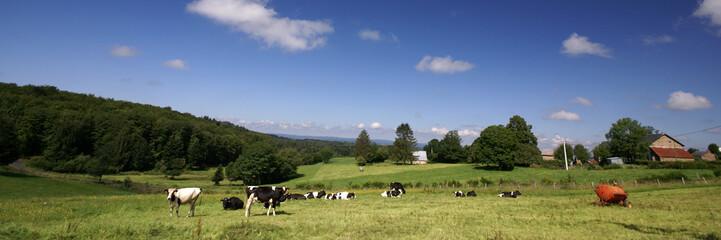 les vaches et la ferme
