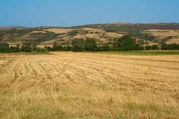 Summer landscape of a moved wheat field