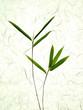 7 bambusblätter am zweig, hintergrund aus japan-papier