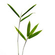 sieben bambusblätter am  zweig, weisser hintergrund