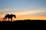 horses on a field - Fine Art prints