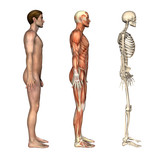 Anatomical Overlays - Side View poster