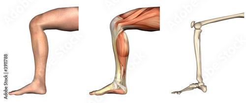 Anatomiczne nakładki - zgięte kolano