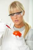 Female scientist injecting liquid into a tomato poster