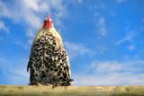 Huhn auf Planke 2 poster