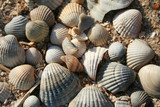 background made of several sea shells . poster