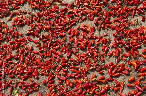 Drying of chilly peppers in India
