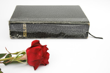On a photo a rose and the Bible.