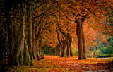 autumn colors in the forest - 3920357