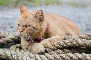 Cat on rope