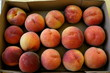 Fresh Organic Summer Peaches from the Orchard