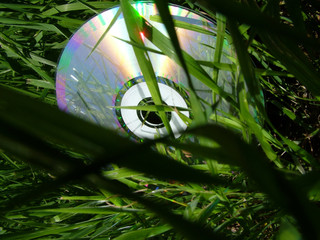 CD in the gras