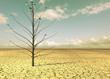Leinwanddruck Bild - Wüstenbaum