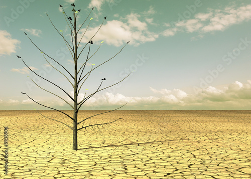 Leinwanddruck Bild Wüstenbaum