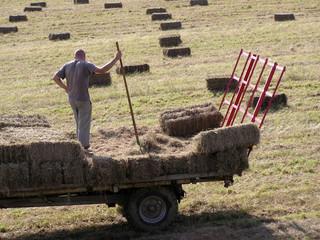 1494 - Travaux des champs : la fenaison
