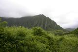 Hawaiian Rain Forest and Mountain poster