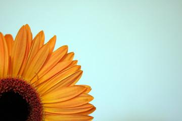 a quarter of a flower