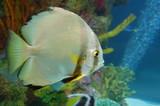 Shiny Fish in Aquarium poster