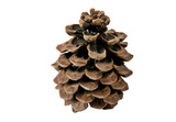 Huge pine cone poster